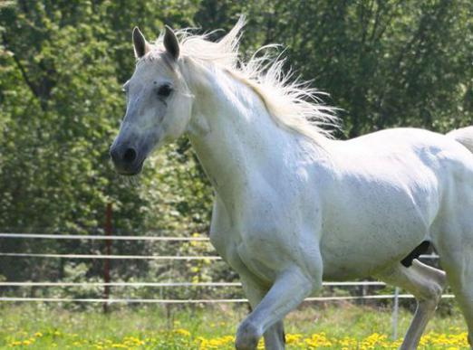 Why does a white horse dream?