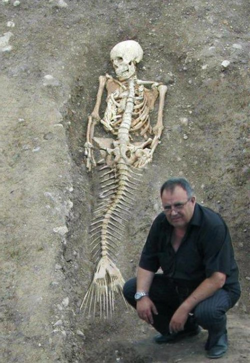 What do mermaids look like?