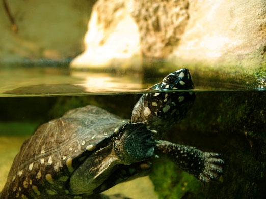 How to care for a turtle?