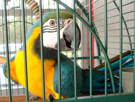 How to care for a parrot?